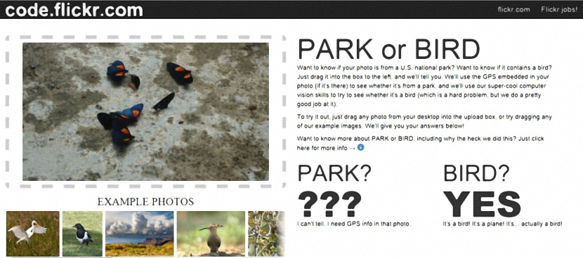 Park or Bird