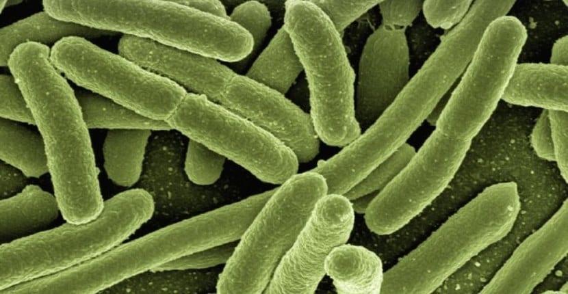 bacterias fecales